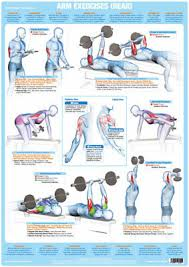 Arm Muscles Rear Weight Lifting Chart Bodybuilding Gym Exercise Poster Ebay