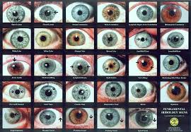 Human Eye Color Chart Go Back Gallery For Natural Eye