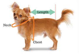 Teacup Chihuahua Size Chart Size Chart