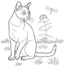 Small Picture Himalayan Cat coloring page from Cats category Select from 24652