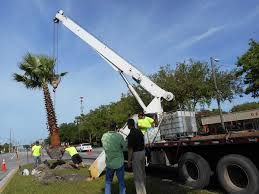 preservation society spearheads bullard parkway palm trees tree nursery tampa33
