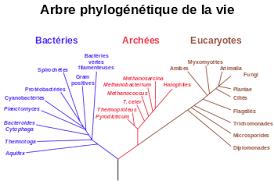 """Résultat de recherche d'images pour """"proximité génétique du vivant- schéma"""""""