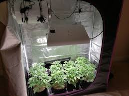 Grow Light Schedule Learn About The Cannabis Vegetative Stage Grow Weed Easy