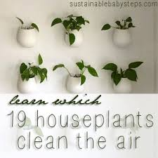 types of houseplants that clean indoor air sustainable baby steps best low light office plants
