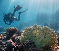 Underwater Light Maya Pdf Download Recreational Dive Sites Wikipedia
