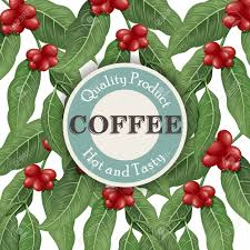 coffee plant illustration vector. Unique Coffee Banque Du0027images  Coffee Tree Illustration Modle De Conception Caf  Cadre Vector Illustration To Plant Illustration T