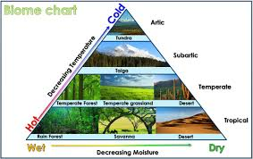 Fill In The Chart With Information About Each Biome Biome Chart Montessori Science Science Biology Biomes