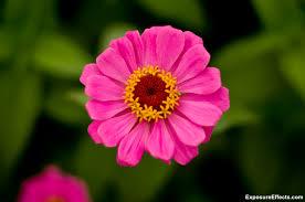 garden flowers. Lalbagh Botanical Garden Bangalore Pink Flowers