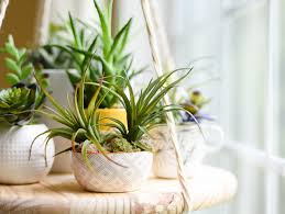what are the best feng s plants for