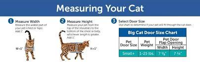 Buy Petsafe Big Cat 4 Way Locking Cat Door Exterior