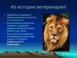 Презентация на тему Моя профессия Ветеринар Скачать бесплатно  4 Из истории ветеринарии