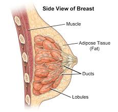 sharp pain in breast. what causes sharp pains hurting from. my nipples to the breast tissue every once in pain