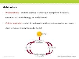Which Process Do Heterotrophic Organisms Use To Release Energy