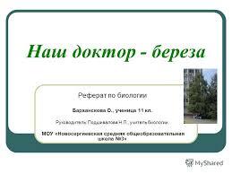 Презентация на тему Наш доктор береза Реферат по биологии  1 Наш доктор береза Реферат