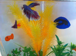 Fish Backgrounds Colorful Fish Tank Backgrounds 11 Steps