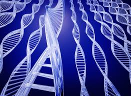 Cientistas descobrem Gene especial que emagrece, previne o câncer e aumenta a longevidade