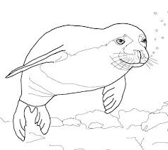 Marvelous Seals Coloring Pages U7851 Stunning Navy Seals Coloring