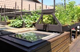 aquaponic gardening. aquaponic gardening maximum survival