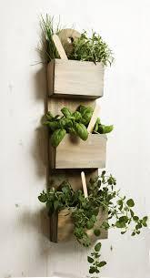 seeds indoor garden plant pot
