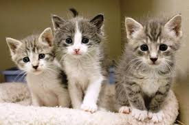animal shelter kittens.  Shelter The Southampton Animal Shelter Is Offering 50 Off Adoption Fees On All  Cats U0026 Kittens Senior Cats Over 7 Are FREE Plus Adopt A Patient Pet  Intended Kittens U