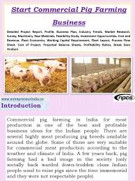 Pig Farming Business Plan Start Commercial Pig Farming Business Detailed Project Report