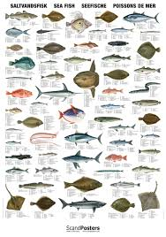 Fish Saltwater Poster Sea Chart Detailed