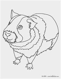 Guinea Pig Coloring Pages Best Pin Cute Hamster Guinea Pig Big