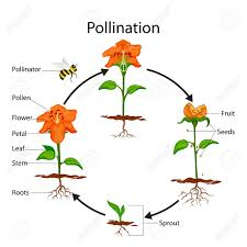 Biology Chart Education Chart Of Biology For Pollination Process Diagram