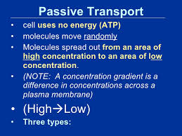 3 Types Of Passive Transport Module 5 Lesson 1 Cell Transport Power Point 1