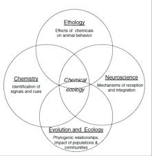 Venn Diagram Problems And Solutions Pdf 4 Circle Venn Diagram Maker Free Four Michaelhannan Co