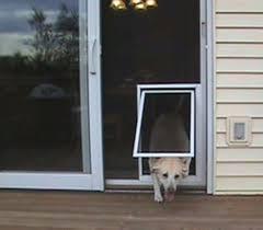best screen doggie door