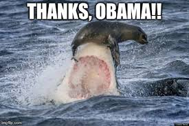image ged in funny sharks seal made