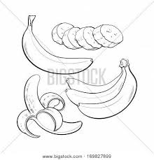 black and white sliced led singl and bunch of three ripe banana sketch