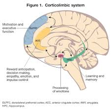 the neurobiology of borderline personality disorder psychiatric borderline personality disorder acircmiddot corticolimbic system