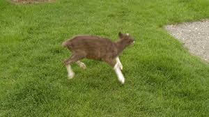 excited animal gif. Fine Gif Animated GIF Run Away Excited Animal Share Or Download Reindeer Nat With Excited Animal Gif I