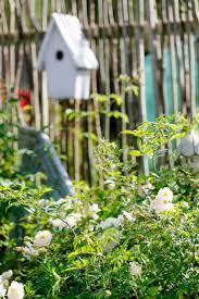 147 Besten Garten Bilder Auf Pinterest G Rten Gartenanlage Und Pflanzstreifen Garten Umrandung Buchsbaumhecken Zitronenbaum