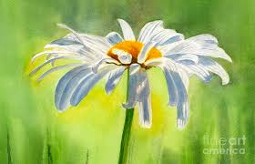 white daisies painting single white daisy blossom by sharon freeman
