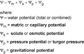 Water Potential Equation Water Potential