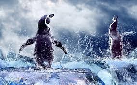 penguin desktop wallpaper.  Penguin On Penguin Desktop Wallpaper T