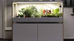 the best indoor garden for every type