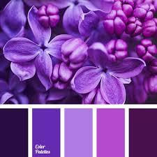 orchid purple color. Perfect Purple Color Palette 2950 More Throughout Orchid Purple F