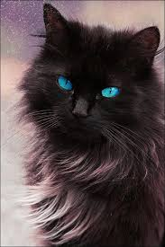 black cat with blue eyes tumblr. Fine Black Black Cat  Via Tumblr Black Cat Blue Eyes  And With Blue Eyes Tumblr
