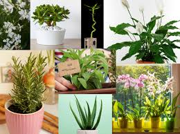 8 Zimmerpflanzen Mit Positiver Energie Wunderweib