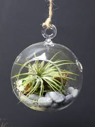 Air Plant Terrarium Air Plant Terrarium Kit Hanging Terrarium Hanging Glass Terrarium