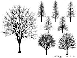 木 冬枯れ ベクターのイラスト素材 23378002 Pixta
