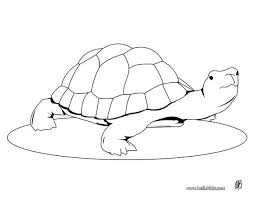 Small Picture Coloring Pages Draw A Turtle Coolagenet