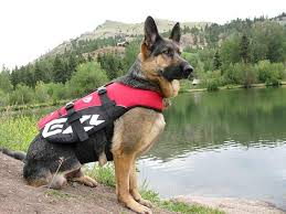 Ezydog Life Jacket Size Chart Free Ezydog Life Vest For Dogs For Objective Product Review