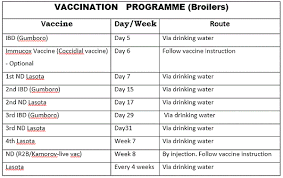 Chicks Vaccination Chart Raising Broilers Layers And Cockerels In Nigeria