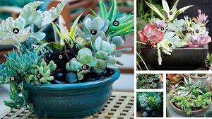 Broken Pots Turned Into Brilliant DIY Fairy GardensSucculent Container Garden Plans
