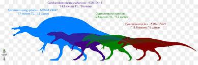 carcharodontosaurus size giganotosaurus dinosaur size carcharodontosaurus mapusaurus